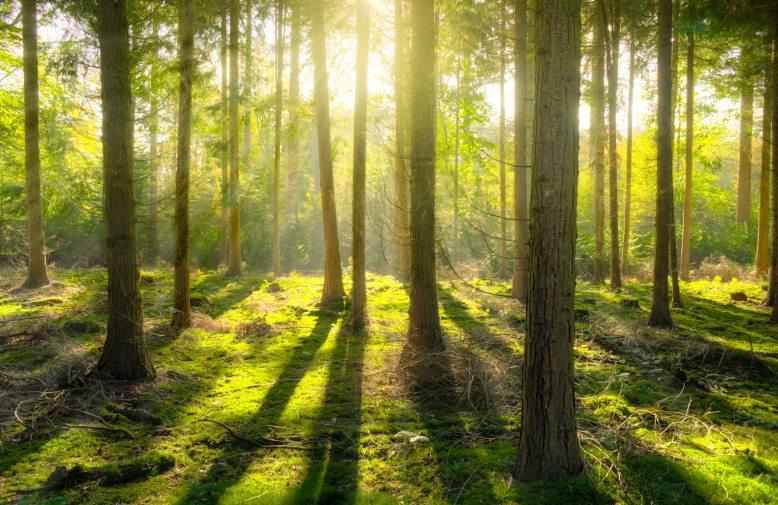 bright-daylight-environment-240040 (1)