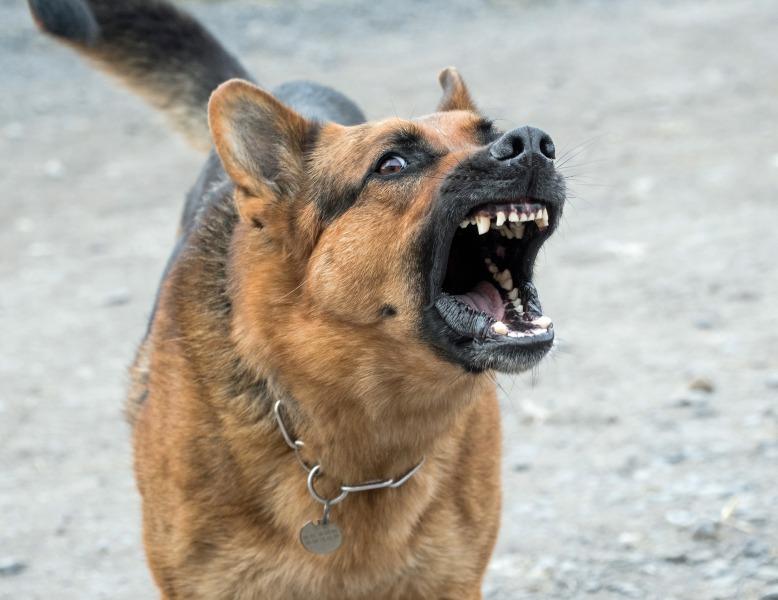 dog-2141358_1920