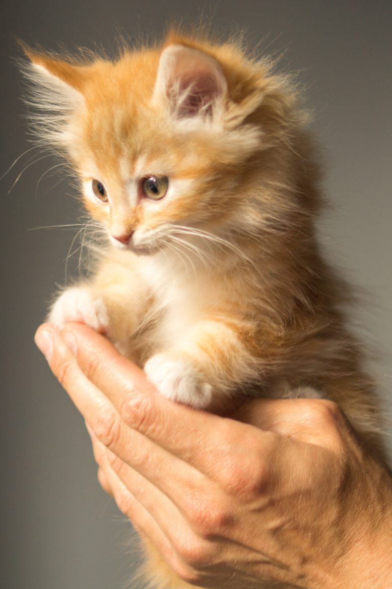 animal-cute-kitten-cat-9413